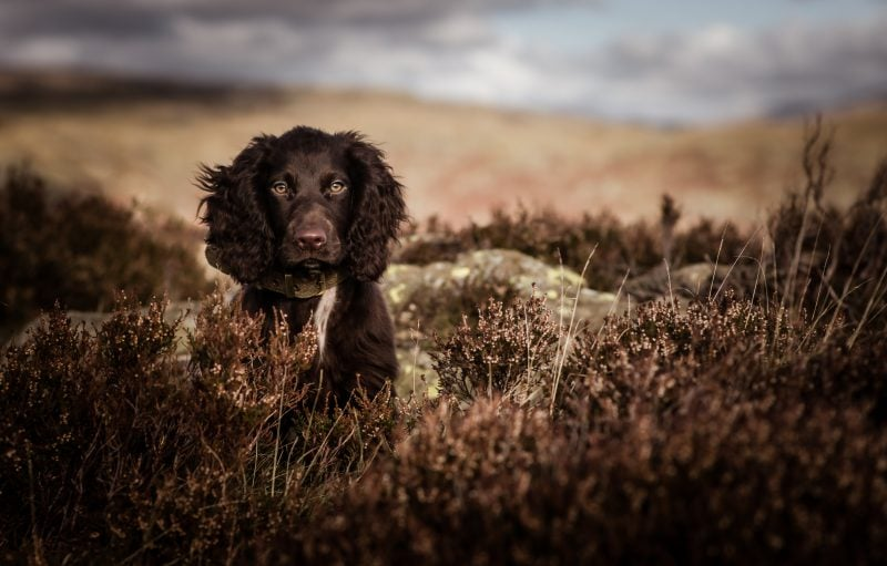 Phodography  - Dog photography session voucher