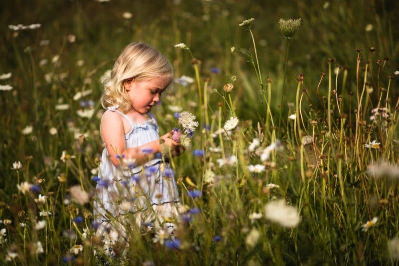 wildflower-meadow-photography-dorset