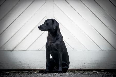 Robin Goodlad dorset dog photographer_009